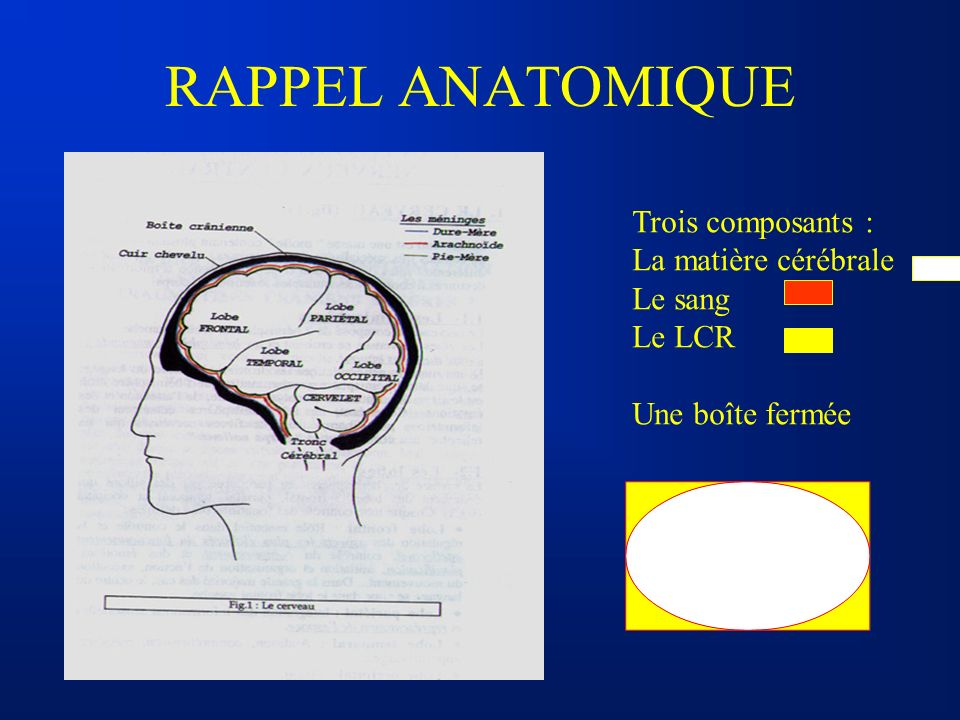 RAPPEL ANATOMIQUE Trois composants : La matière cérébrale Le sang