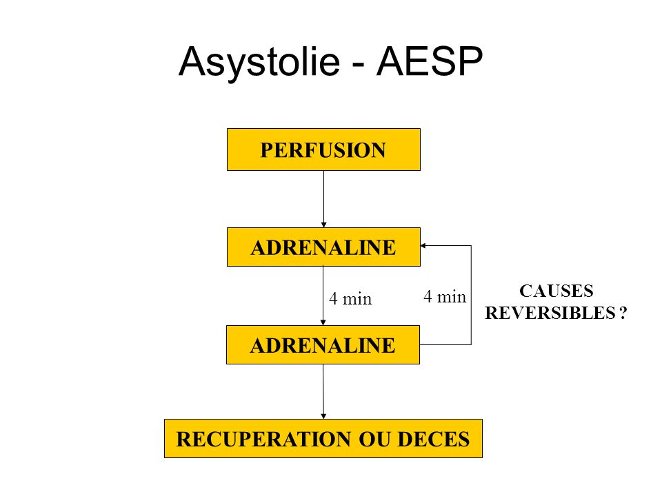 Asystolie - AESP PERFUSION ADRENALINE ADRENALINE RECUPERATION OU DECES