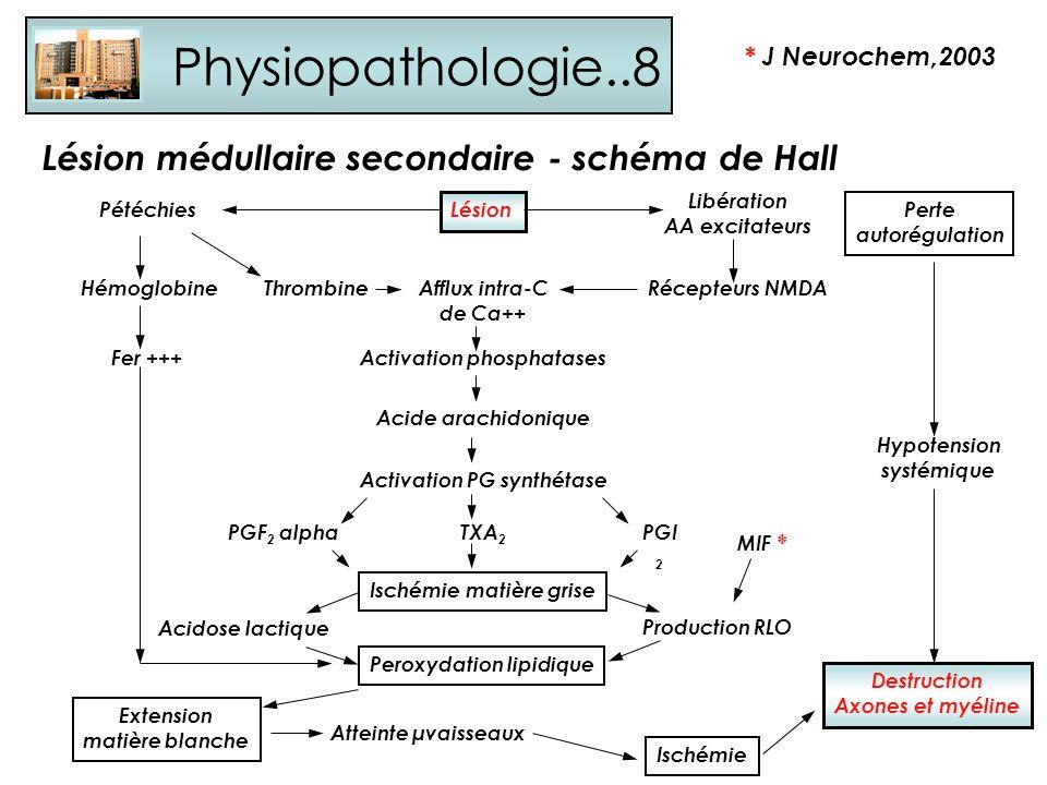 Physiopathologie..8 Lésion médullaire secondaire - schéma de Hall
