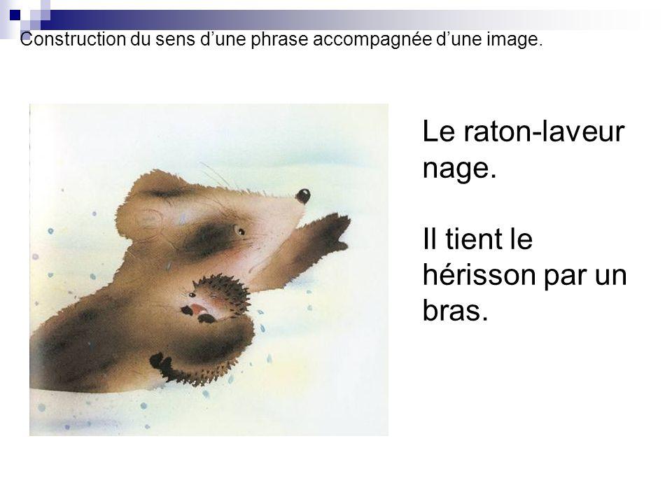 Construction du sens d'une phrase accompagnée d'une image.