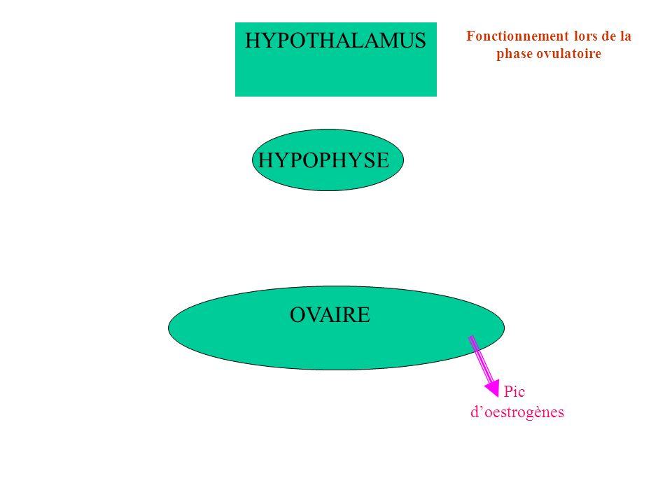 Fonctionnement lors de la phase ovulatoire
