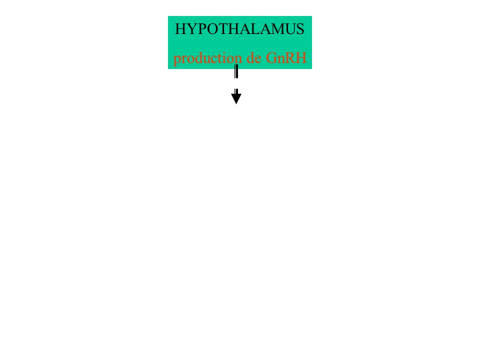 HYPOTHALAMUS production de GnRH