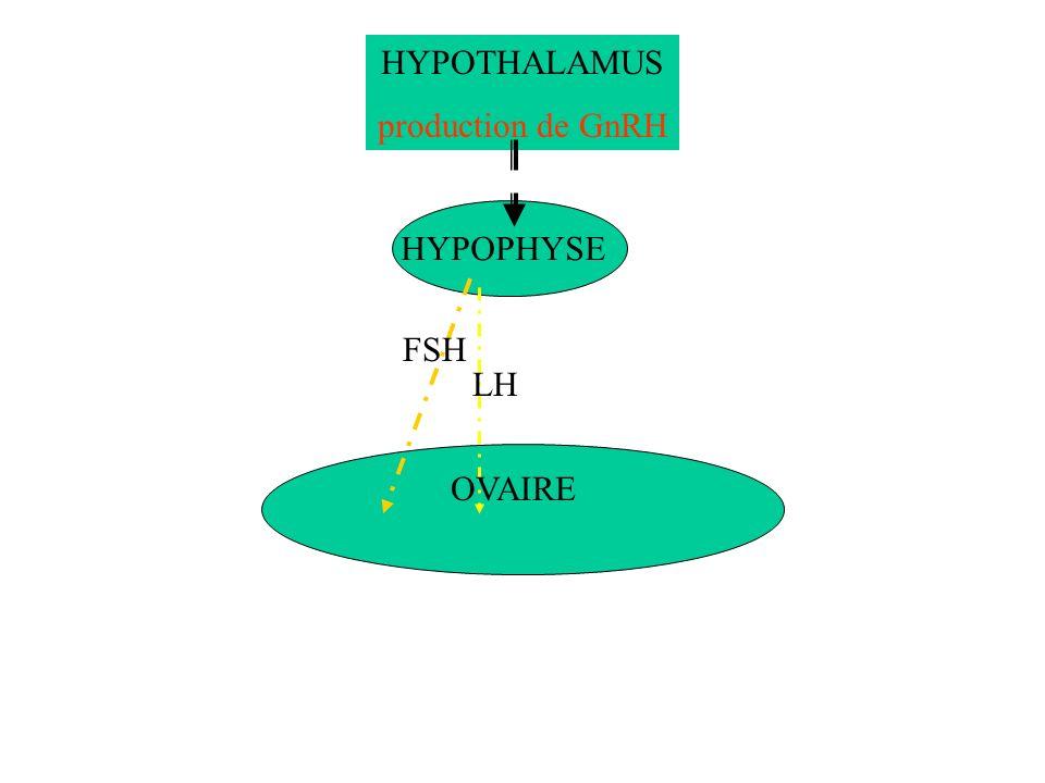 HYPOTHALAMUS production de GnRH HYPOPHYSE FSH LH OVAIRE