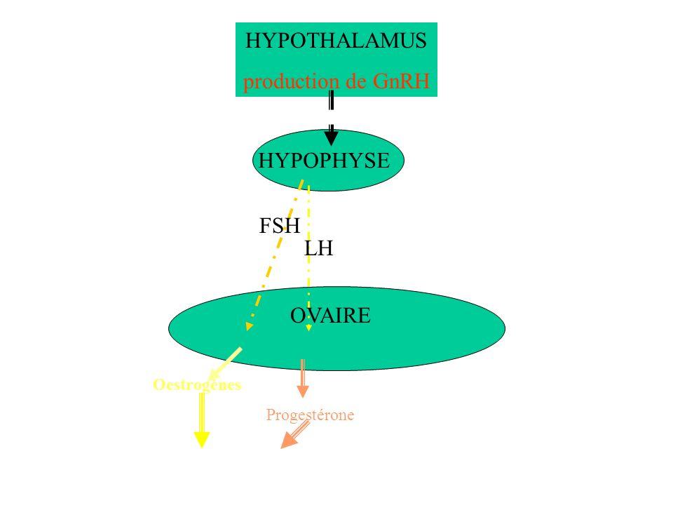 HYPOTHALAMUS production de GnRH HYPOPHYSE FSH LH OVAIRE Oestrogènes