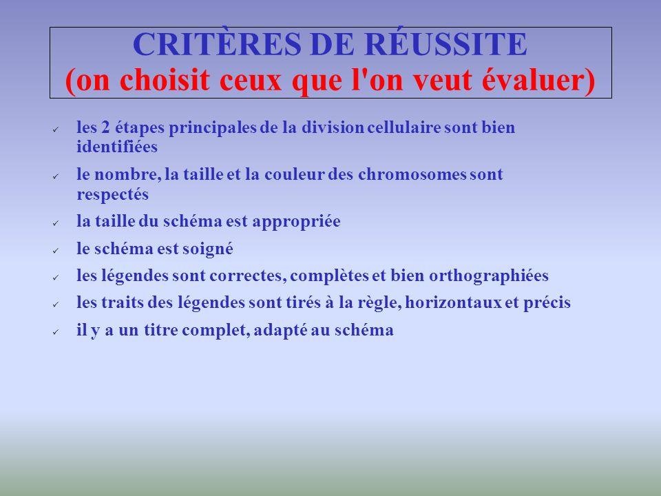 CRITÈRES DE RÉUSSITE (on choisit ceux que l on veut évaluer)