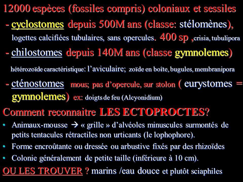 12000 espèces (fossiles compris) coloniaux et sessiles