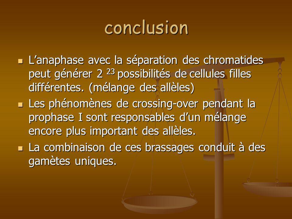 conclusion L'anaphase avec la séparation des chromatides peut générer 2 23 possibilités de cellules filles différentes. (mélange des allèles)