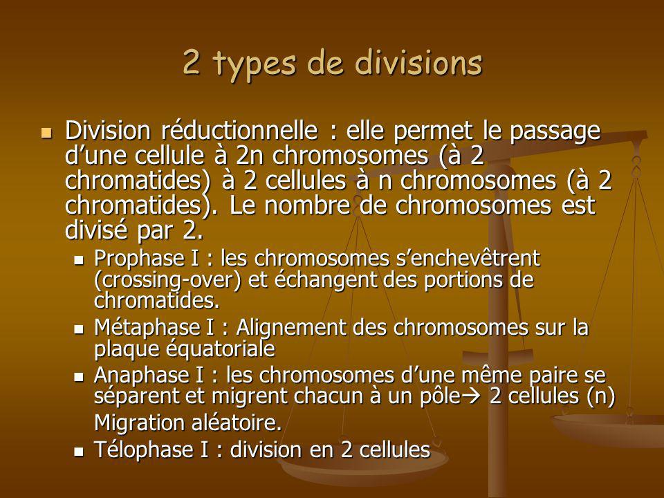 2 types de divisions