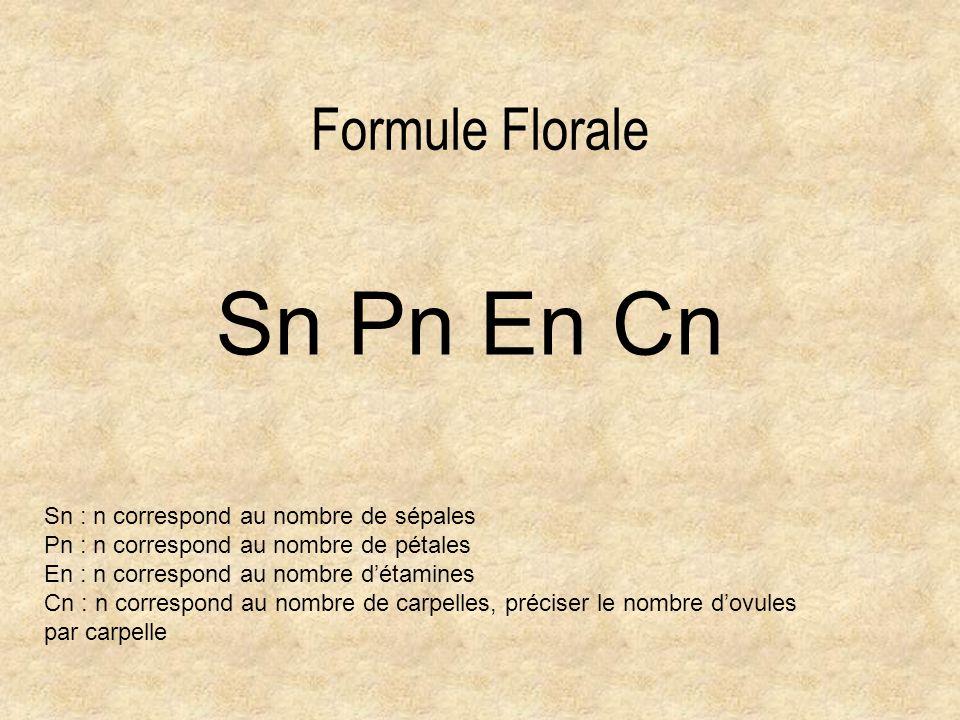 Sn Pn En Cn Formule Florale Sn : n correspond au nombre de sépales