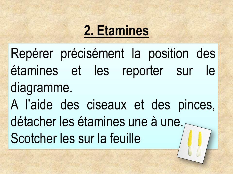 2. EtaminesRepérer précisément la position des étamines et les reporter sur le diagramme.