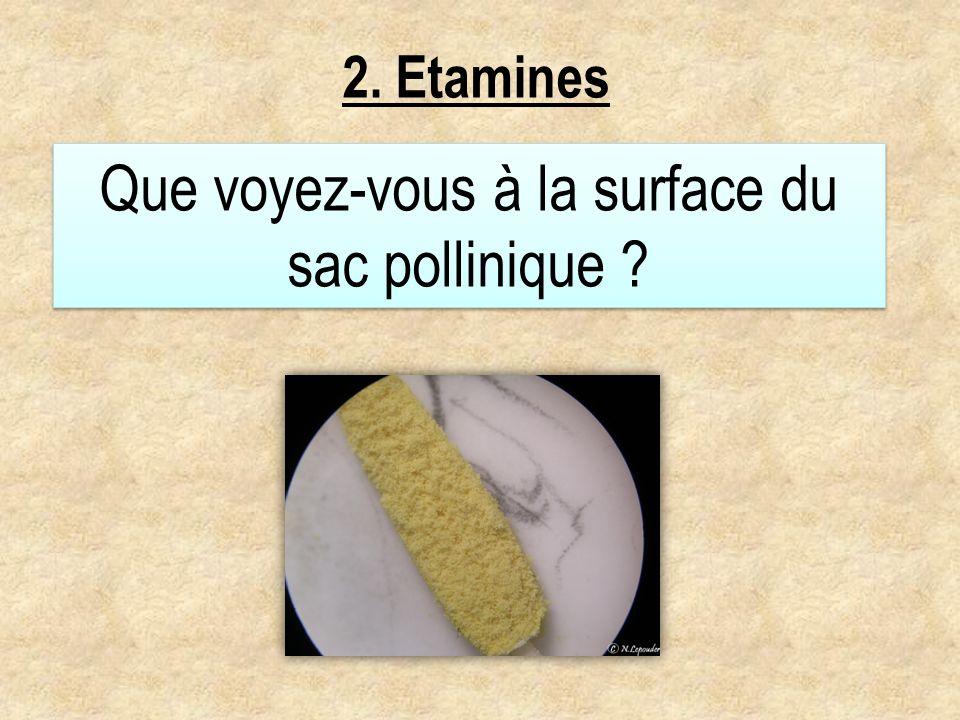 Que voyez-vous à la surface du sac pollinique