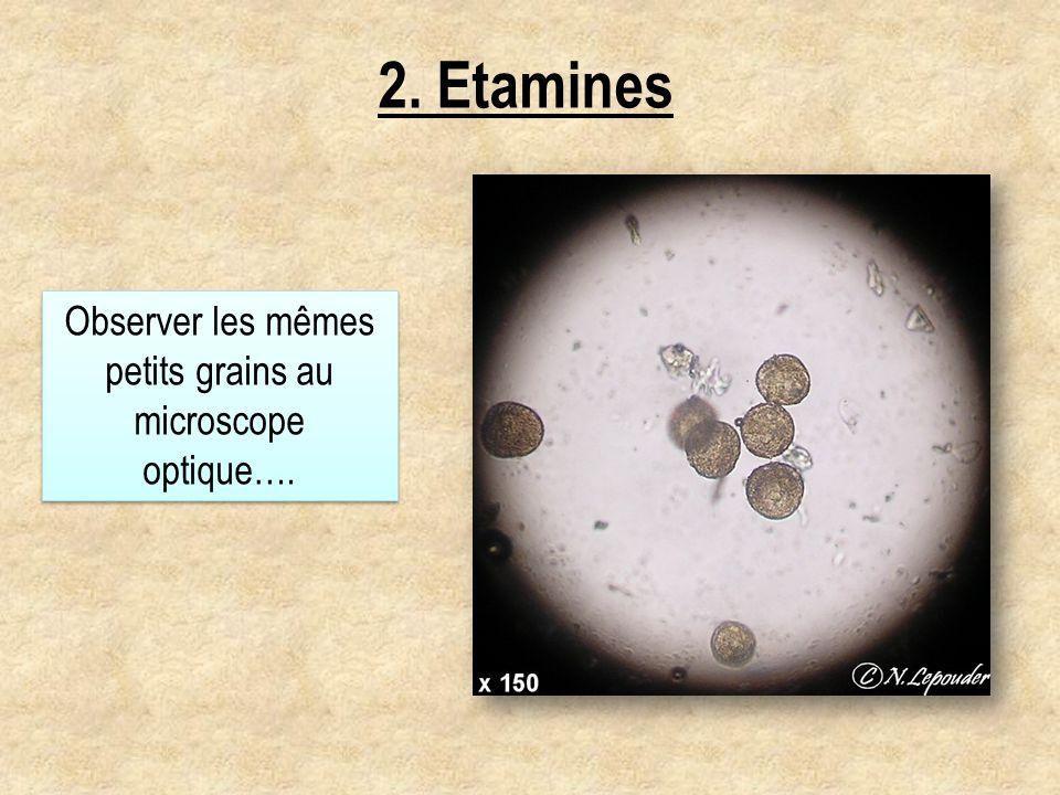 Observer les mêmes petits grains au microscope optique….