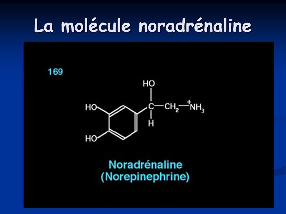 La molécule noradrénaline