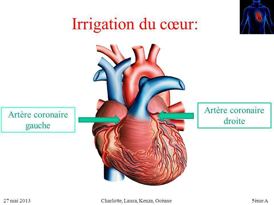 Irrigation du cœur: Artère coronaire droite Artère coronaire gauche
