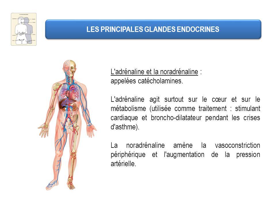 LES PRINCIPALES GLANDES ENDOCRINES