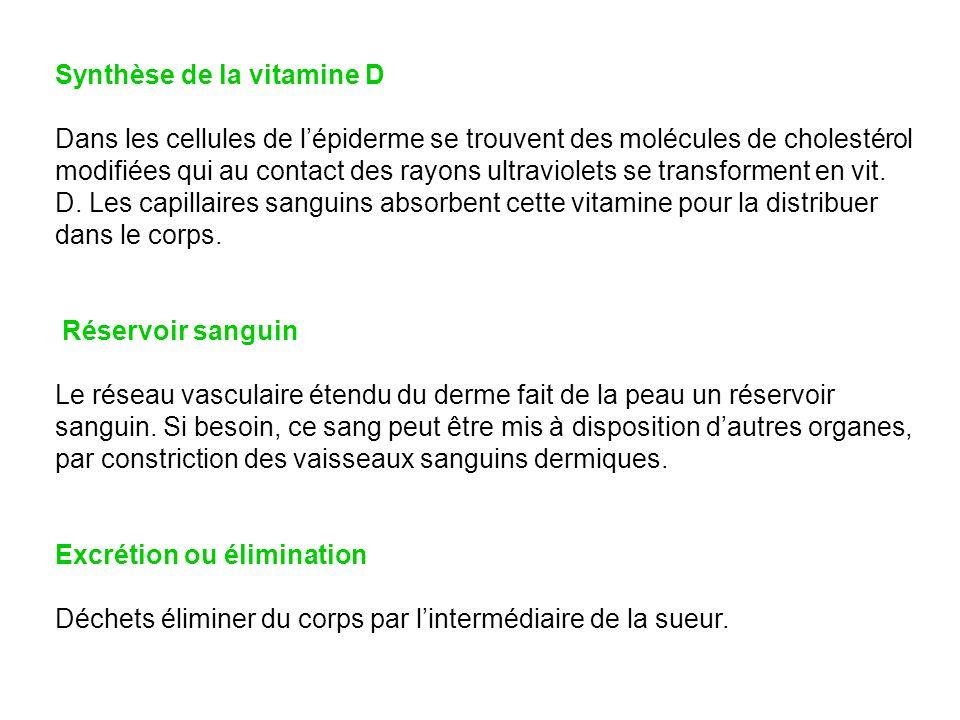 Synthèse de la vitamine D