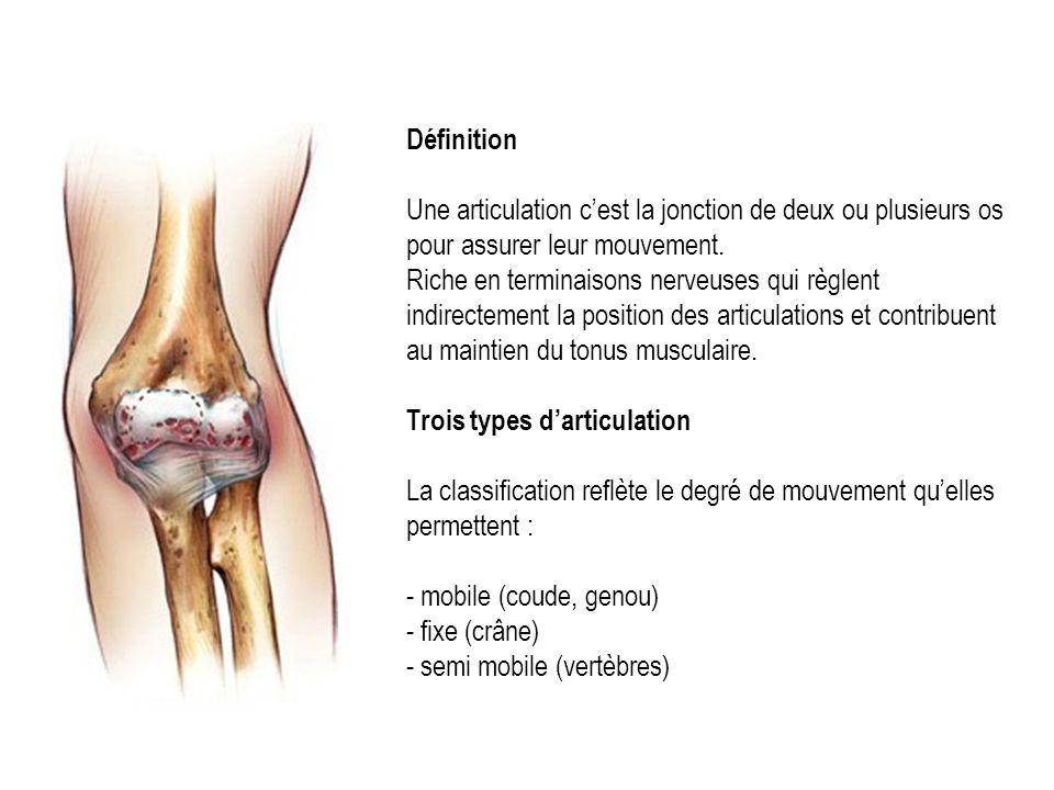 Définition Une articulation c'est la jonction de deux ou plusieurs os pour assurer leur mouvement.