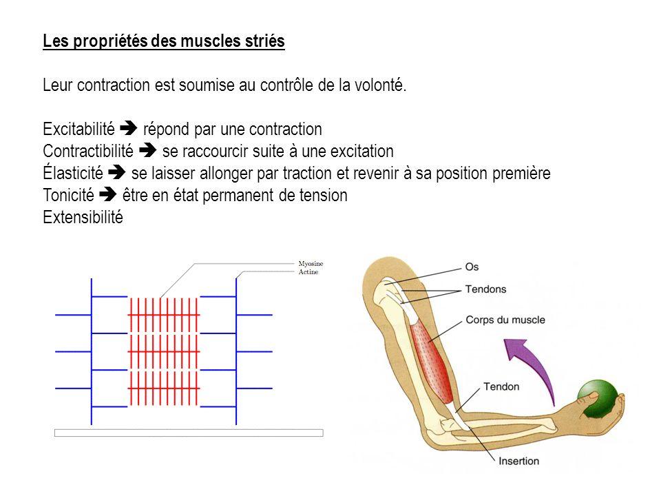 Les propriétés des muscles striés