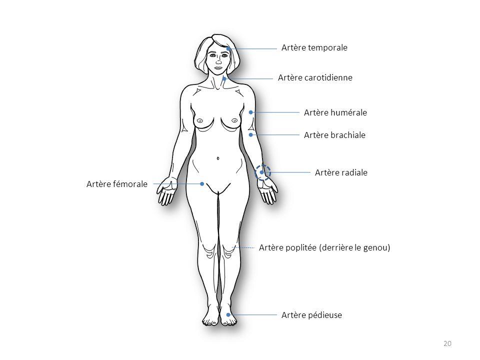 Artère temporaleArtère carotidienne. Artère brachiale. Artère radiale. Artère humérale. Artère poplitée (derrière le genou)