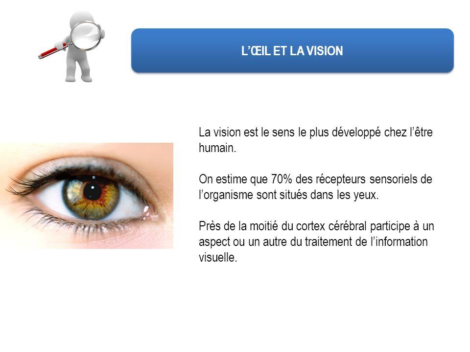 L'ŒIL ET LA VISION La vision est le sens le plus développé chez l'être humain.