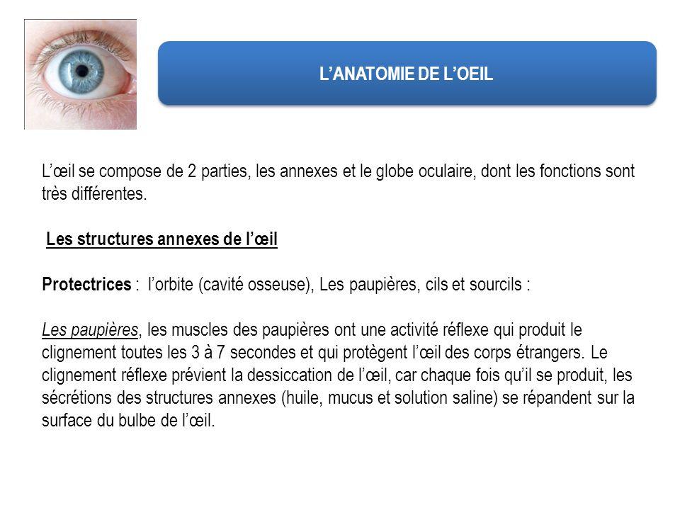 L'ANATOMIE DE L'OEIL L'œil se compose de 2 parties, les annexes et le globe oculaire, dont les fonctions sont très différentes.