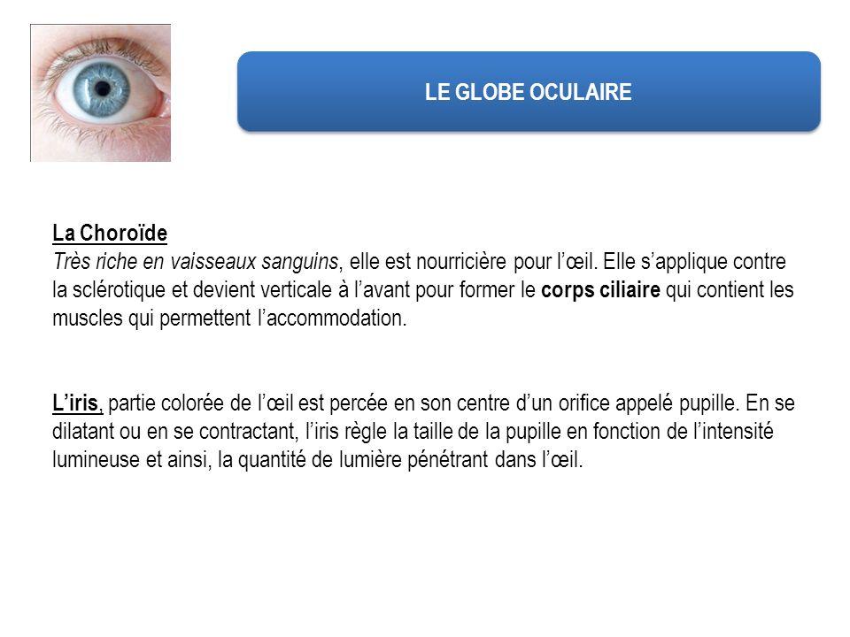 LE GLOBE OCULAIRE La Choroïde.