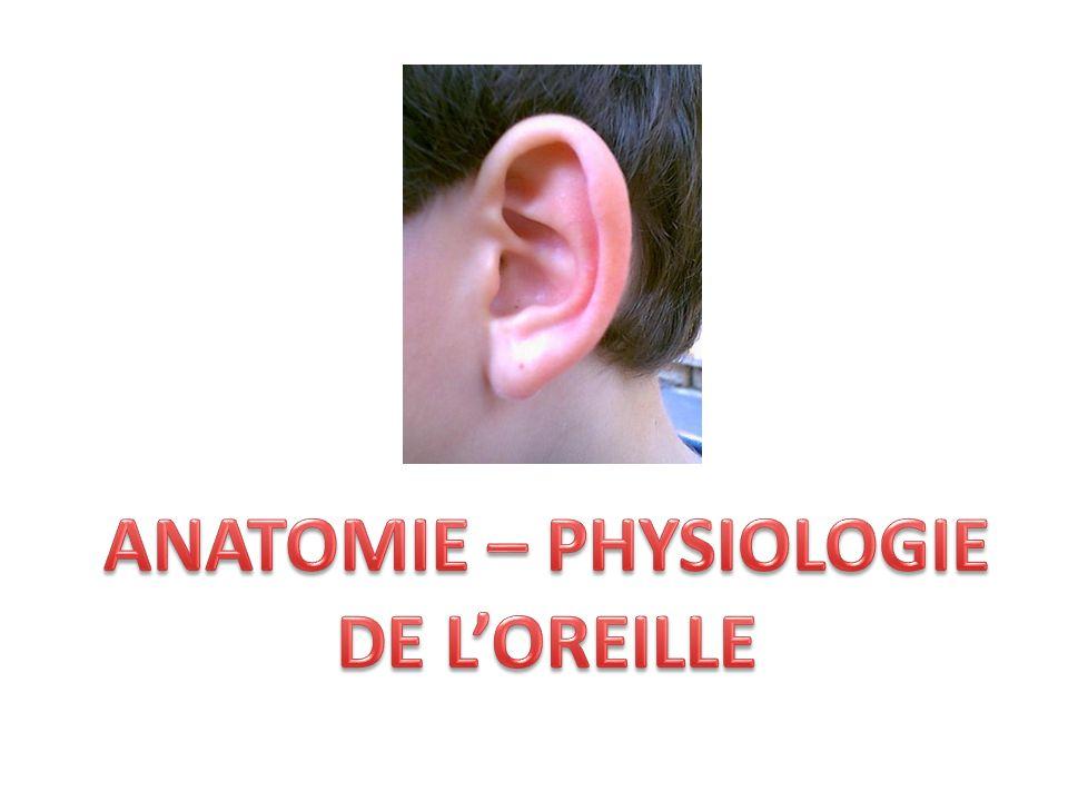 ANATOMIE – PHYSIOLOGIE