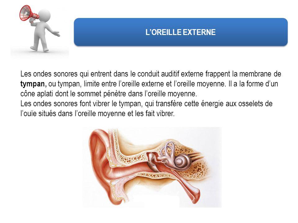 L'OREILLE EXTERNE