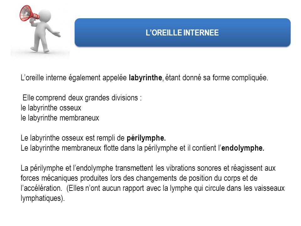 L'OREILLE INTERNEE L'oreille interne également appelée labyrinthe, étant donné sa forme compliquée.
