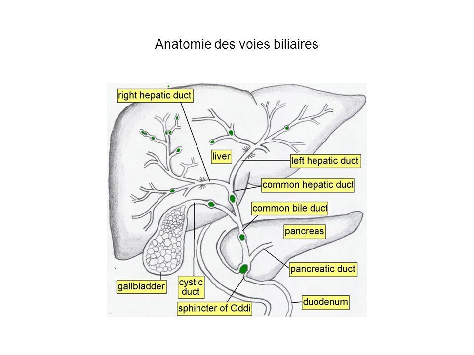 Anatomie des voies biliaires