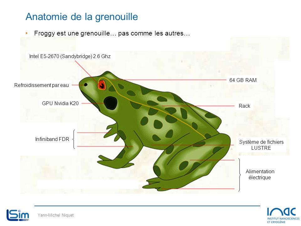 Anatomie de la grenouille