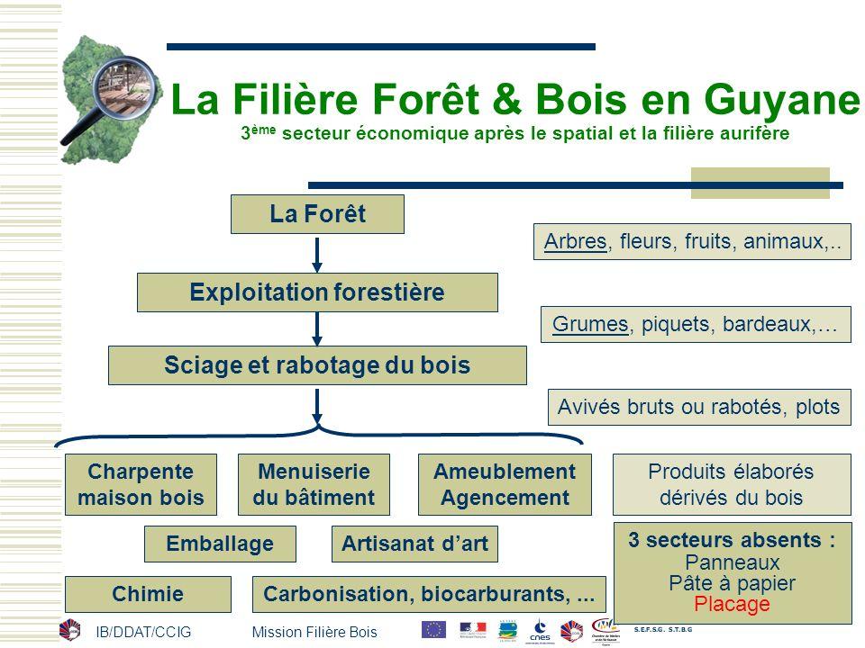 La Filière Forêt & Bois en Guyane 3ème secteur économique après le spatial et la filière aurifère