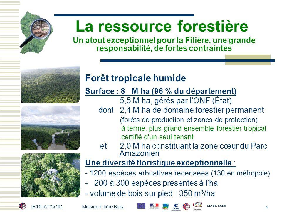 La ressource forestière