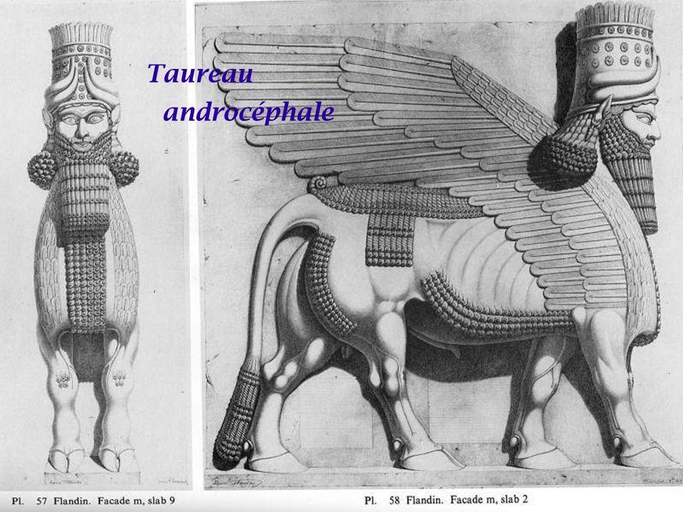 Taureau androcéphale