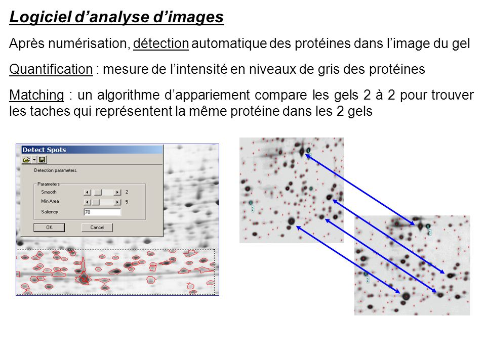 Logiciel d'analyse d'images