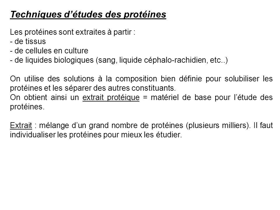 Techniques d'études des protéines