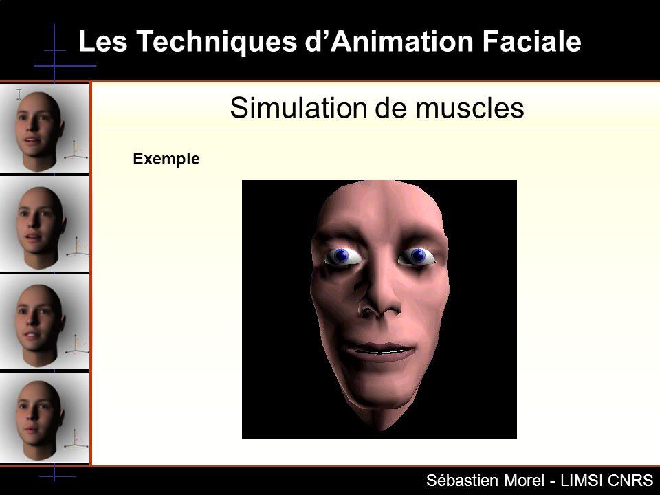 Simulation de muscles Exemple