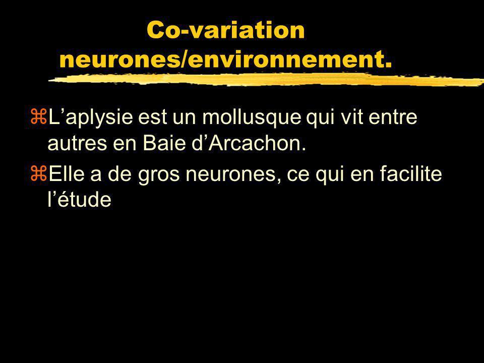 Co-variation neurones/environnement.