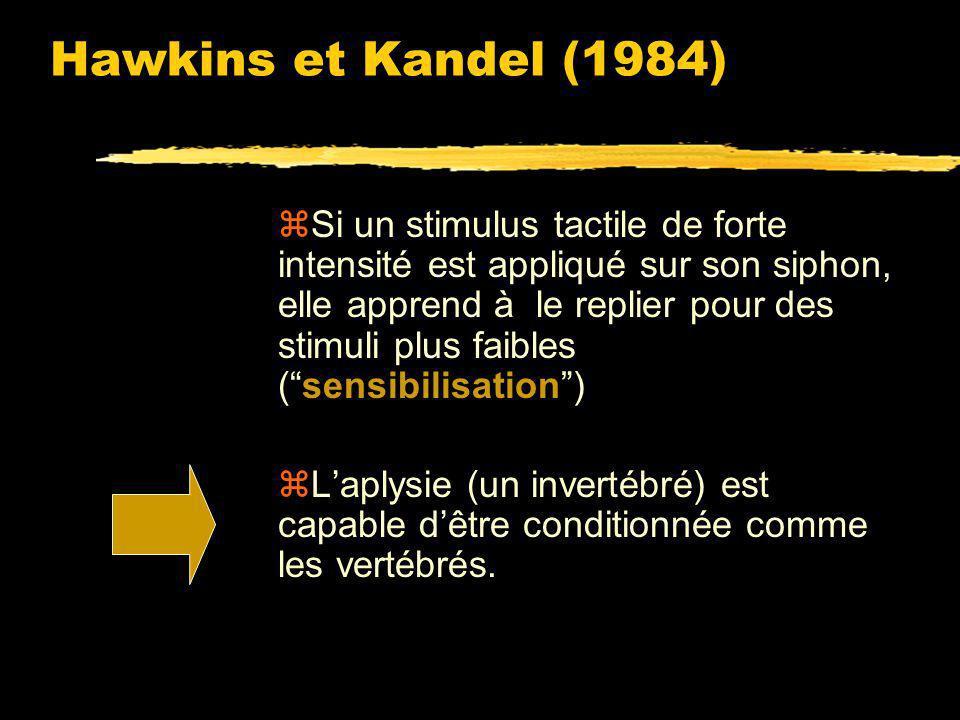 Hawkins et Kandel (1984)