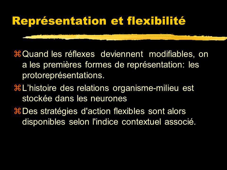 Représentation et flexibilité