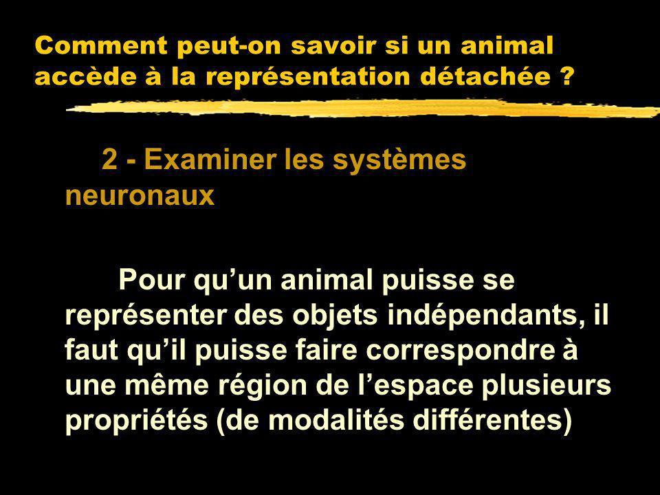 2 - Examiner les systèmes neuronaux