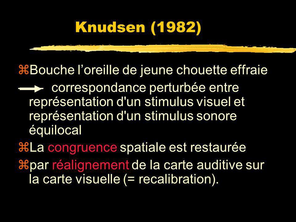Knudsen (1982) Bouche l'oreille de jeune chouette effraie