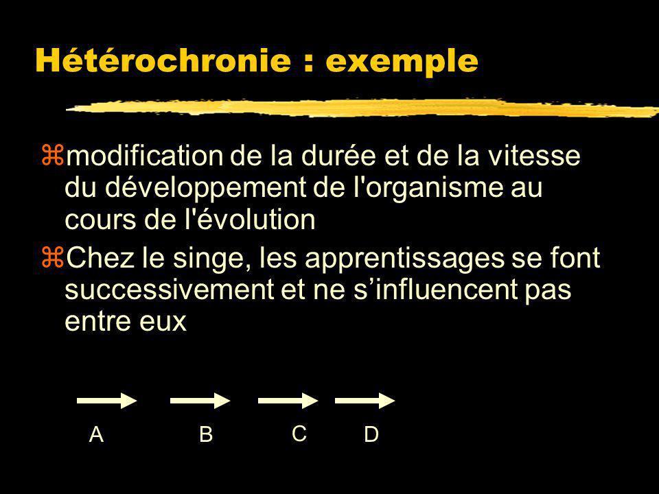 Hétérochronie : exemple