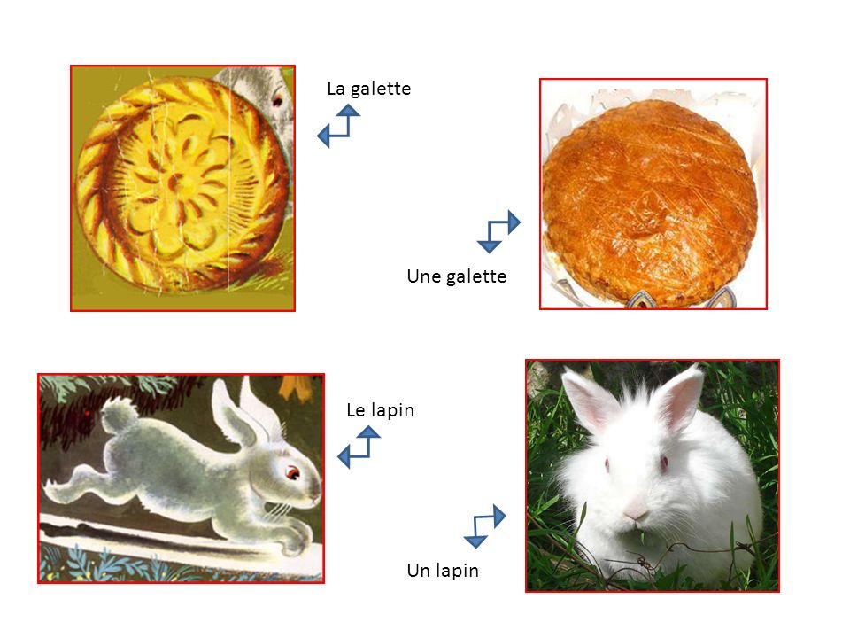 La galette Une galette Le lapin Un lapin