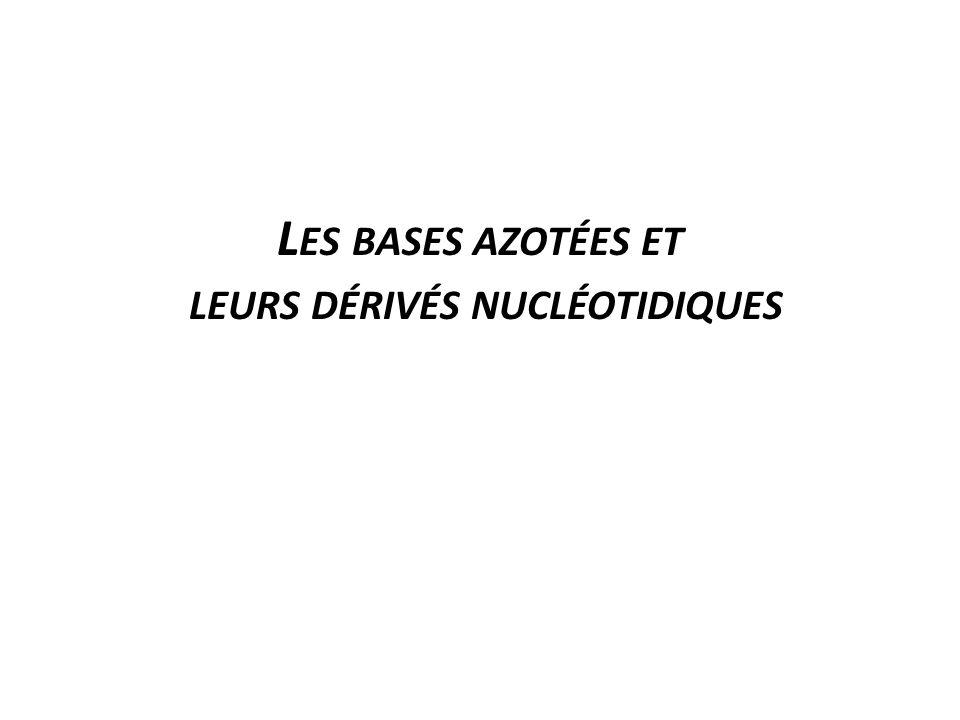 Les bases azotées et leurs dérivés nucléotidiques