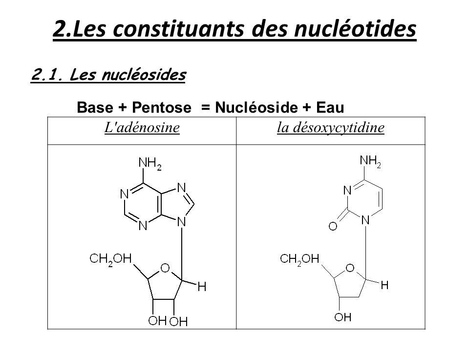 2.Les constituants des nucléotides