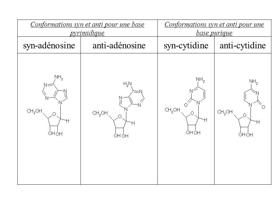 syn-adénosine anti-adénosine syn-cytidine anti-cytidine