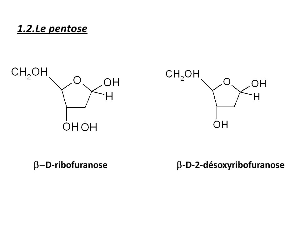 1.2.Le pentose b-D-ribofuranose b-D-2-désoxyribofuranose