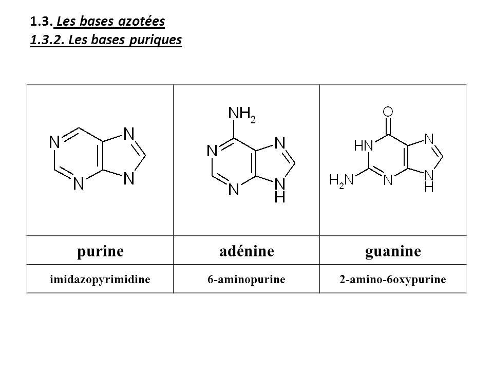 1.3. Les bases azotées 1.3.2. Les bases puriques