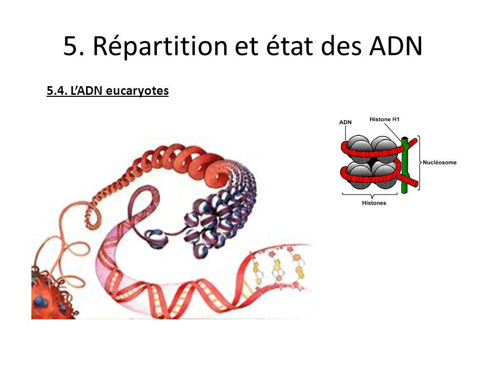 5. Répartition et état des ADN